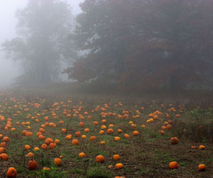 fog, grass, and pumpkin image