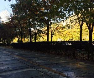 autumn, boulevard, and nature image