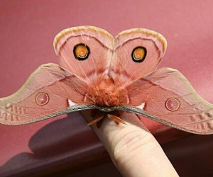 butterfly, pink, and butterfield image
