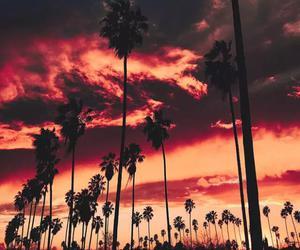 sky, sunset, and palms image
