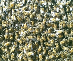 bee, summer, and bees image