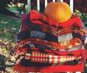 pumpkin, red, and scarves image