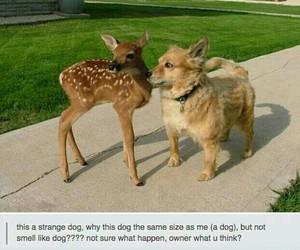 funny, dog, and deer image