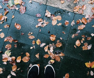 autumn, cold, and day image