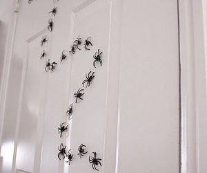 diy, Halloween, and spider image