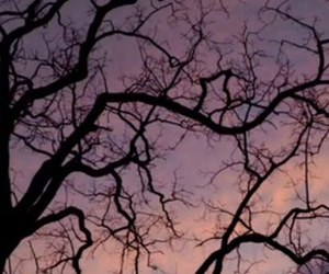 aesthetic and tree image