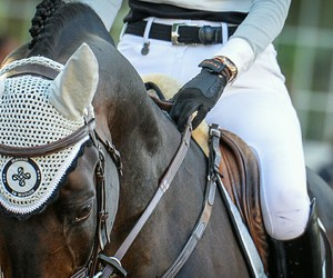 apparel, equestrian, and equine image