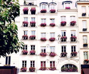 flowers, building, and white image
