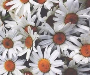 beautiful, sunflowers, and tumblr image
