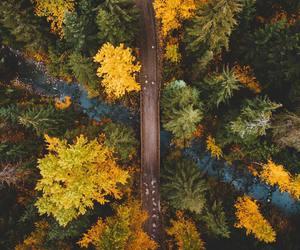 autumn, colourful, and nature image
