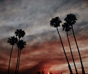 california, palms, and photography image