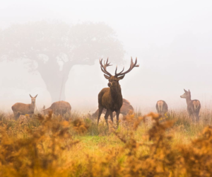 animals, autumn, and outdoor image