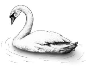 Swan and white swan image