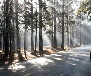 forest, light, and yosemite image