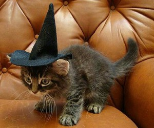 adorable, cat, and witch image