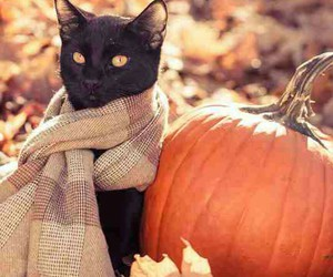86 images about halloween stuff on we heart it see more about