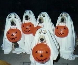 dog, Halloween, and ghost image
