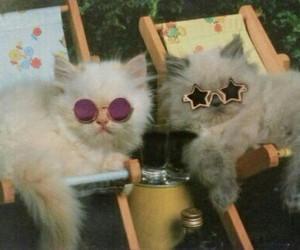 cat, grunge, and sunglasses image
