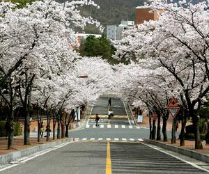 korea, south korea, and daegu image