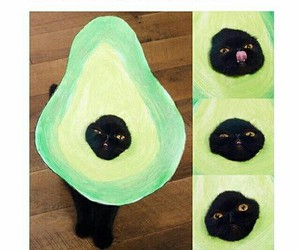 cat, Halloween, and avocado image