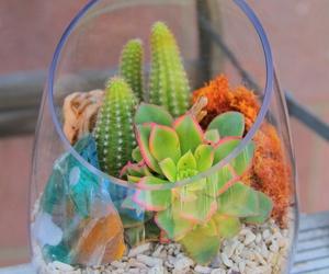 cacti image