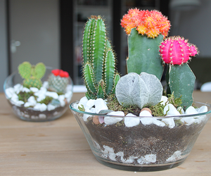 cacti, cute, and flower image