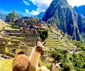 alpaca, llama, and mountains image