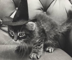 cat, cute, and Halloween image