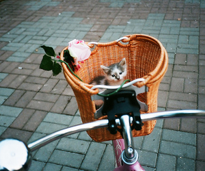 cat, cute, and bike image