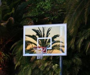 Basketball, summer, and palms image