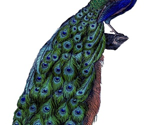 art, peacock, and blue image