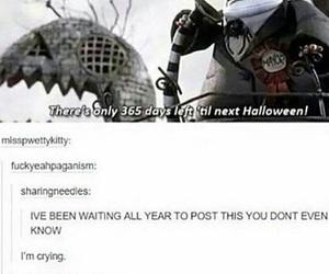 haha, tumblr post, and meme image