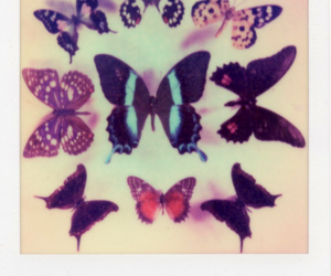 butterflies, old, and polaroid image