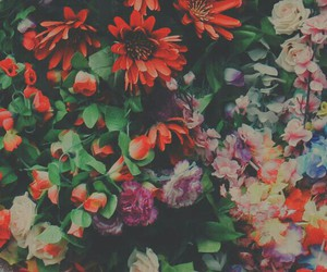 background, colorful, and flores image