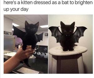 cute, bat, and cat image