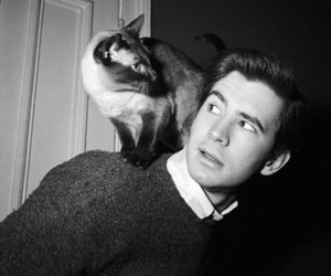 anthony perkins and cat image