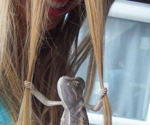 animal, hair, and funny image