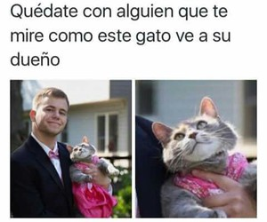 cat, memes en español, and divertido image