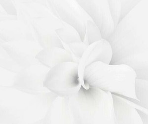 white, flowers, and nature image