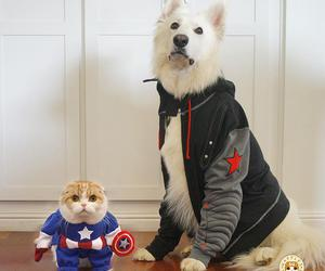 captain america, cute, and waffless image