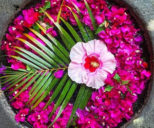 coconuts, hibiscus, and flower image