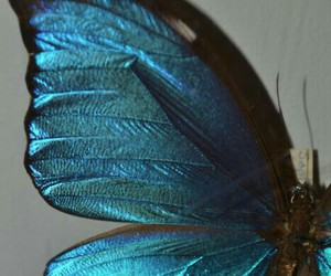 butterfly, blue, and black and white image