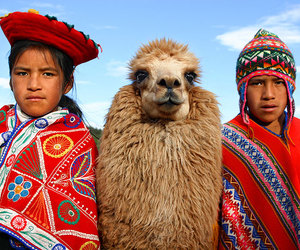animal and culture image