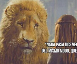 narnia, lion, and frases image