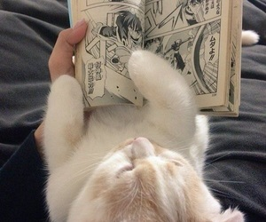 cat, cute, and manga image