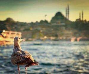 beach, city, and islam image