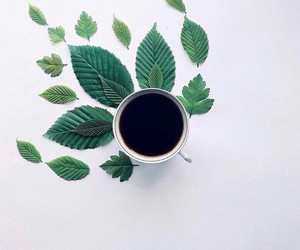 coffee, leaves, and green image
