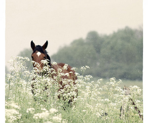 horse, flowers, and nature image