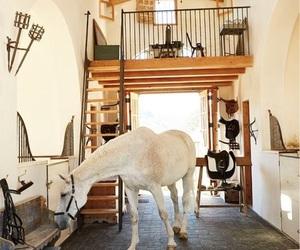 extravagant, white horse, and happy horse image