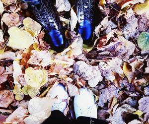 autumn, fall, and leaf image